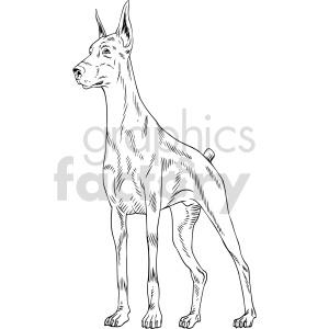 animals dobermann dog black+white  Doberman+Pinscher