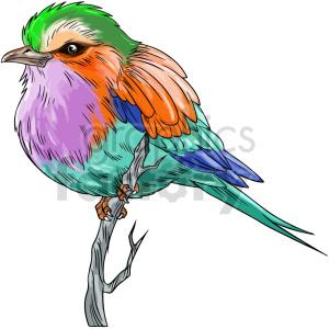 colorful bird vector clipart
