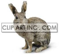 Grey rabbit sitting alone photo. Royalty-free photo # 176862