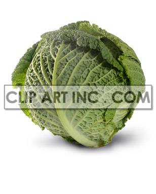A head of lettuce clipart. Royalty-free image # 176927