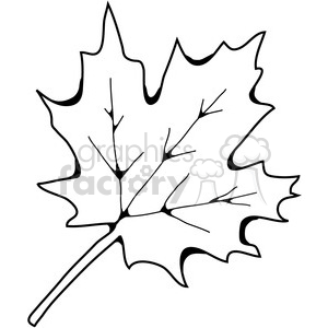 Sugar Maple Leaf clipart. Royalty-free image # 387458