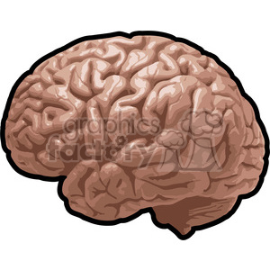 brain illustration clipart. Royalty-free image # 390060