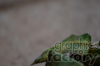 dead leaf photo. Royalty-free photo # 391078