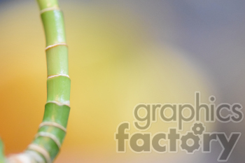 bamboo tree branch clipart. Royalty-free image # 391083
