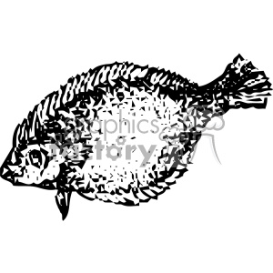 vintage distressed flounder fish GF vector design vintage 1900 vector art GF clipart. Royalty-free image # 402426