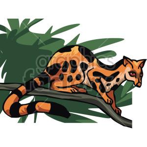 lemur clipart. Royalty-free image # 129318