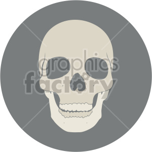 front facing skull on circle background clipart. Royalty-free image # 408368