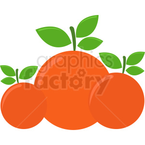 three oranges vector icon