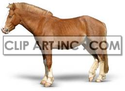 horse mammal domestic animal brown horses   2A0038lowres Photos Animals