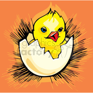 Blue eyed baby chick chirping and hatching clipart. Commercial use image # 144258