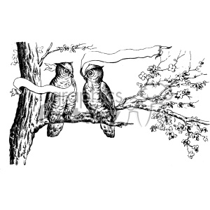 vintage distressed vintage owls in a tree with a ribbon GF vector design vintage 1900 vector art GF clipart. Royalty-free image # 402435