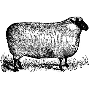 vintage sheep facing right vector vintage 1900 vector art GF clipart. Royalty-free image # 402525