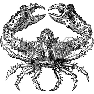 vintage retro old black+white crab tattoo