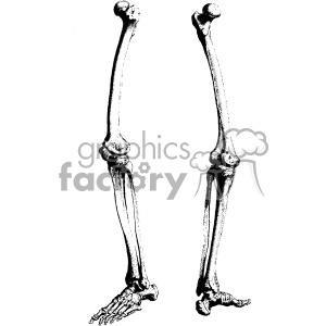 William Cheselden vector leg bones anatomy art clipart. Royalty-free image # 403127