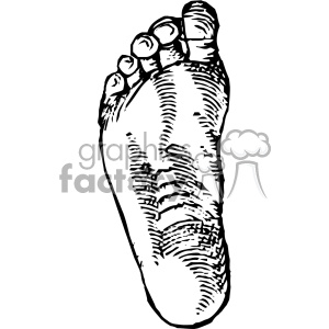 cousin jehan vintage bottom of foot vector anatomy art