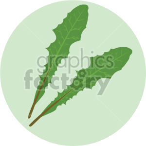 romaine lettuce leaves on green circle background