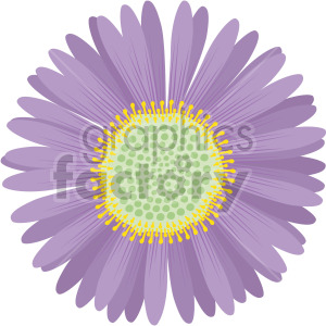 aster flower clipart. Royalty-free image # 408063