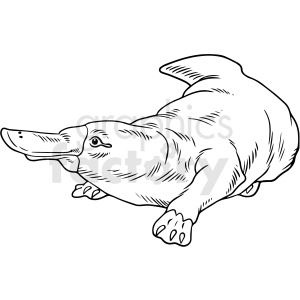 black and white realistic platypus vector clipart