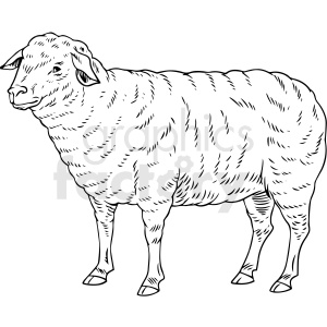 black and white realistic sheep vector clipart clipart. Commercial use image # 411811