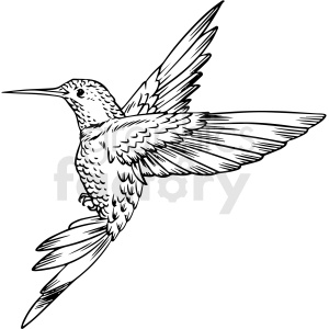 black and white hummingbird vector clipart
