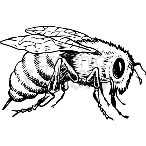 black and white realistic bee vector clipart clipart. Royalty-free image # 413195