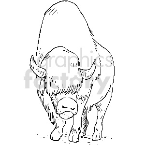 black and white bison vector clipart
