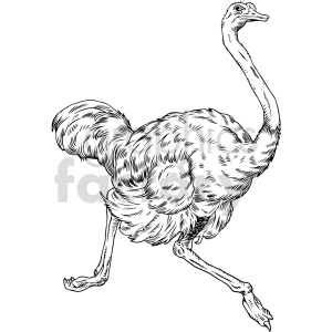 clipart - black and white ostrich vector clipart.