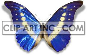 butterfly butterflies insect   2A8501lowres Photos Animals