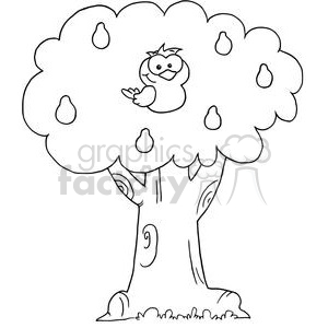 a partridge in a pear tree clipart. Commercial use image # 377865