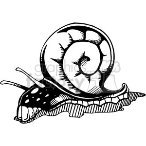 snail tattoo design clipart. Royalty-free image # 387127