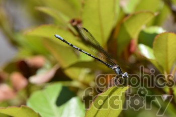 dragonfly photo. Royalty-free photo # 390976