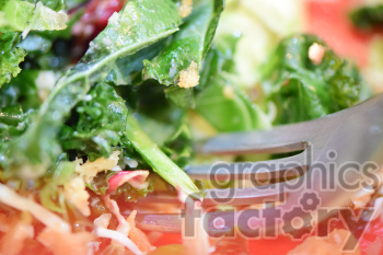 kale salad clipart. Commercial use image # 391141