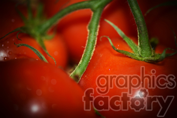 tomatoes photo. Royalty-free photo # 391266
