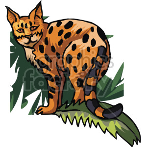 lynx clipart. Royalty-free image # 129298