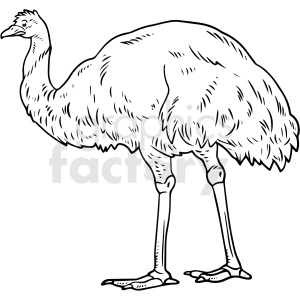 black and white realistic ostrich vector clipart clipart. Commercial use image # 411800