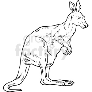 black and white realistic kangaroo vector clipart