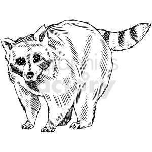 black and white raccoon vector illustration clipart. Commercial use image # 412592