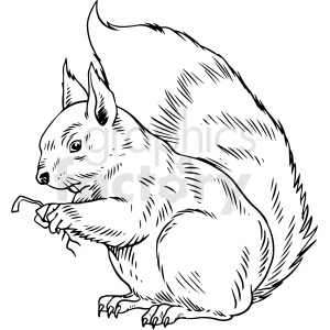 black and white squirrel vector illustration clipart. Commercial use image # 412595
