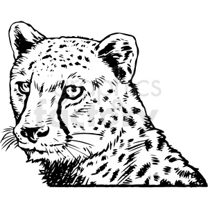 black and white realistic cheetah vector clipart clipart. Commercial use image # 413212