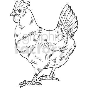food chicken black+white
