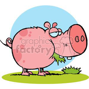 Cartoon Character Pig Chewing Grass clipart. Commercial use image # 379308