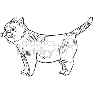 straight cat vector illustration clipart. Royalty-free image # 398079