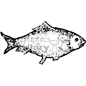 vintage distressed shad fish GF vector design vintage 1900 vector art GF
