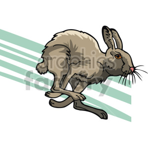 jackrabbit running clipart. Royalty-free image # 129286
