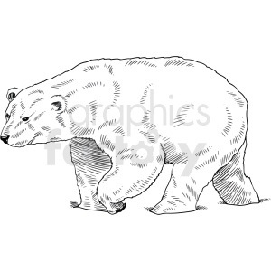 black and white polar bear vector clipart clipart. Commercial use image # 411470