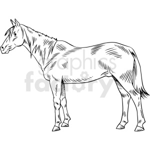 black and white realistic horse vector clipart clipart. Commercial use image # 411799