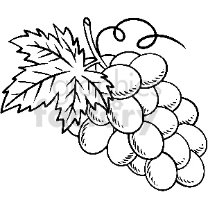 black and white grapes vector clipart clipart. Commercial use image # 413299