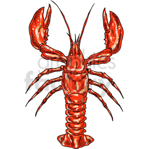 lobster clipart clipart. Commercial use image # 415048