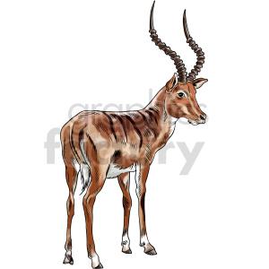 animals antilope