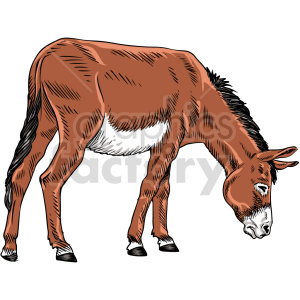 clipart - donkey vector graphic.